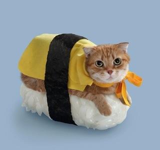 猫ずし.jpg